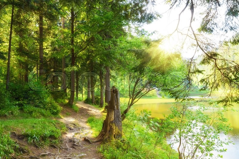 Stock image of 'Forest trail in the forest near the lake. Summer season'