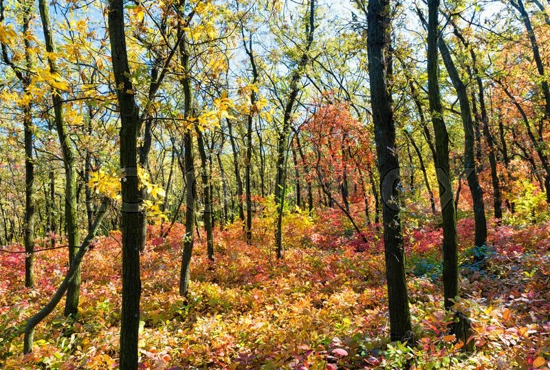Stock image of 'Autumn season. Bright colorful autumn forest'
