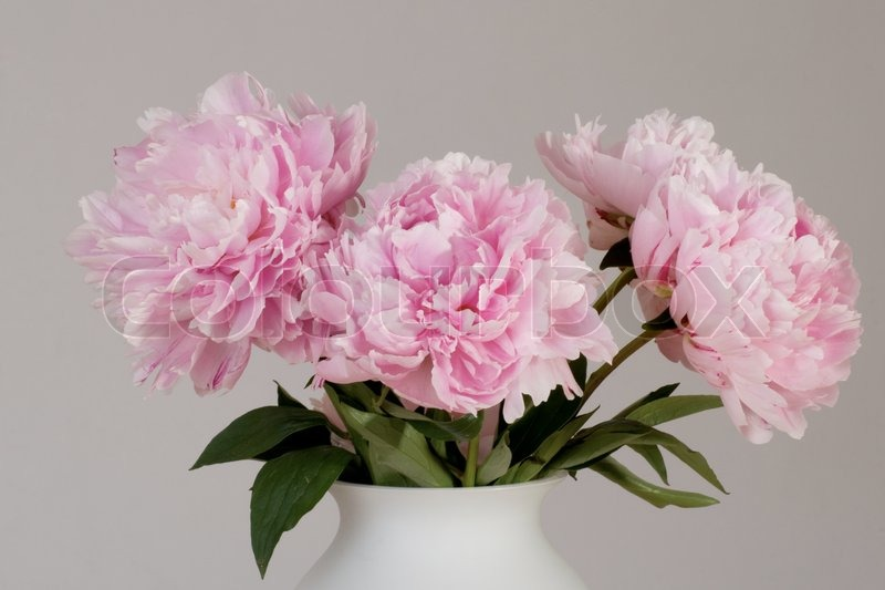 Bigheaded delicate pink flowers in vase on gray background stock bigheaded delicate pink flowers in vase on gray background stock photo colourbox mightylinksfo