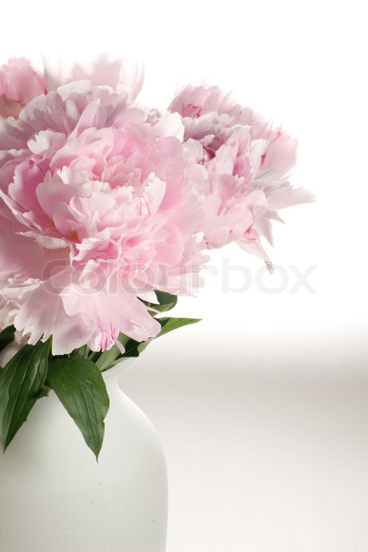 Bigheaded Delicate Pink Flowers In Vase Stock Photo Colourbox