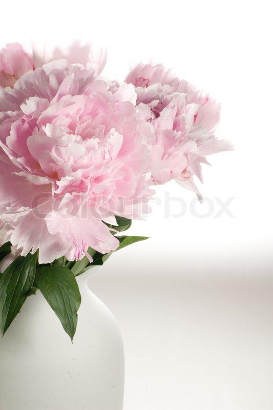 Bigheaded delicate pink flowers in vase stock photo colourbox mightylinksfo