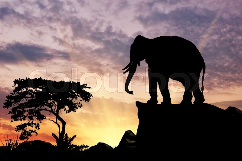 Stock image of 'Silhouette of an elephant on the hill at sunset savanna'