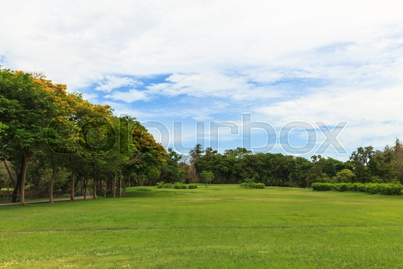 Stock image of 'Green trees in beautiful park with blue sky'