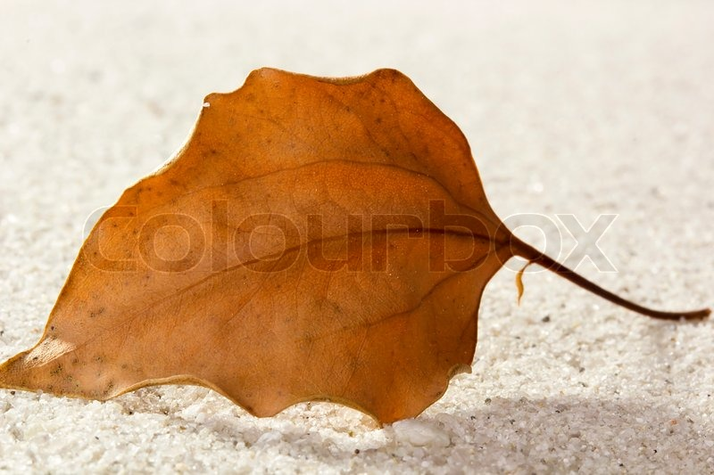 dry leaves as sand substitute for The myth in the mix and with the best reserved for the outer leaf of the facade to a large whereas saturated and bone-dry sand have identical volumes.