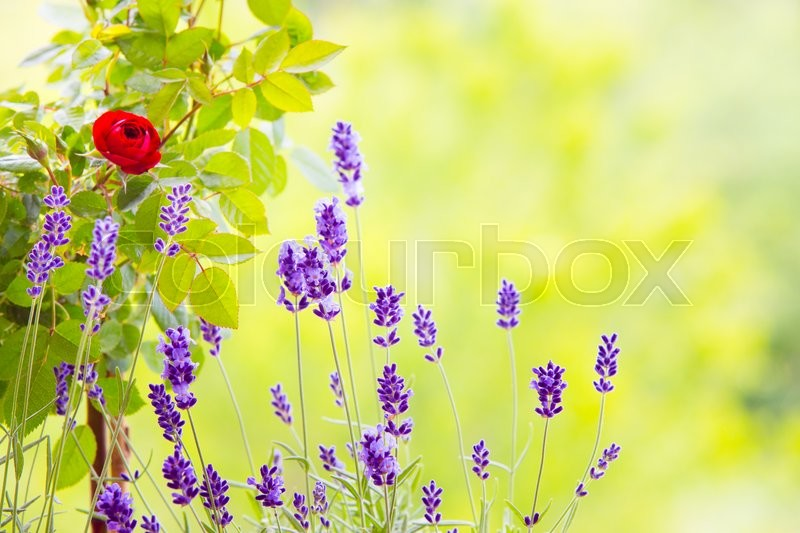 Stock Bild von 'züchtend, floral, background'