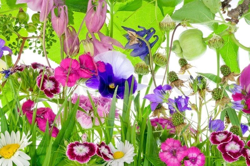 Best Flowers For Small Flower Beds