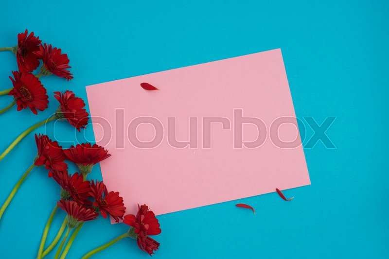 Stock image of 'Red gerbera and petals on pink and blue background with space for your text'
