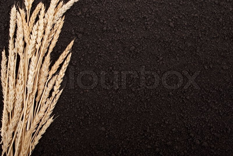 how to get wheat in a ground