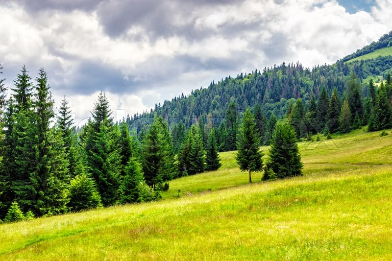 Mountain landscape. meadow on hill side with coniferous forest, stock photo