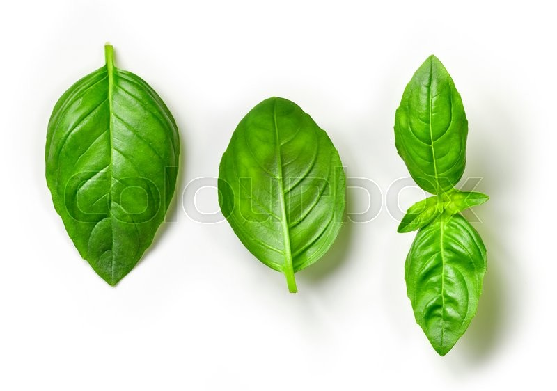 Stock image of 'fresh green basil leaves isolated on white background, top view'