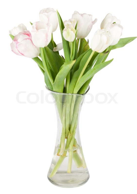 Bright tulips in a vase isolated on white background ...