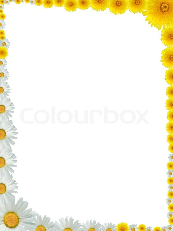 Nice frame made from lot of yellow dandelion and ox-eye daisy flowers |  Stock Photo | Colourbox