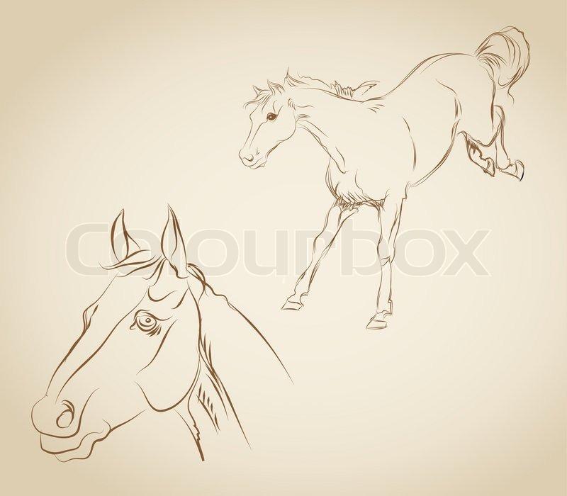 Vektor Zeichnen Ein Pferd Vektorgrafik Colourbox