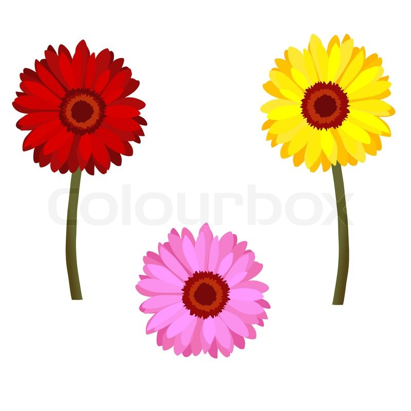 Set Of Realistic Daisy Flowers Red Pink And Yellow