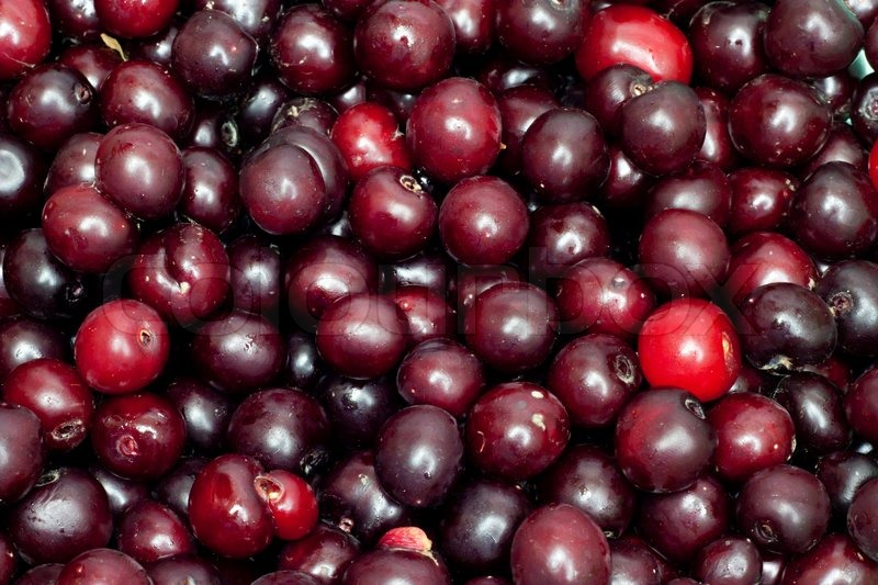 Black cherry in the background | Stock Photo | Colourbox