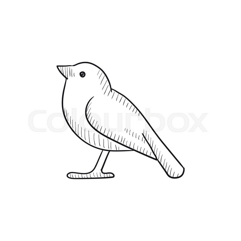 bird vector sketch icon isolated on background hand drawn bird icon bird sketch icon for infographic website or app stock vector colourbox