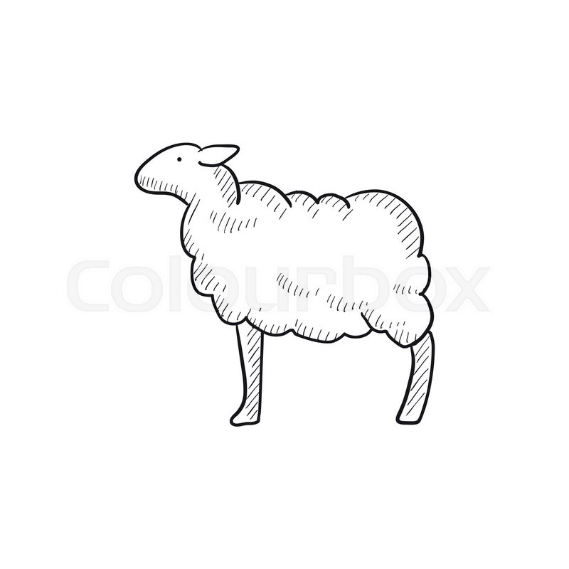 sheep vector sketch icon isolated on background hand drawn sheep icon sheep sketch icon for infographic website or app stock vector colourbox