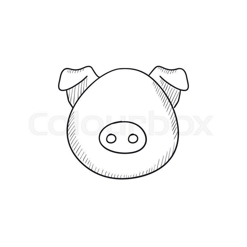 Pig head vector sketch icon isolated on background. Hand drawn Pig ...