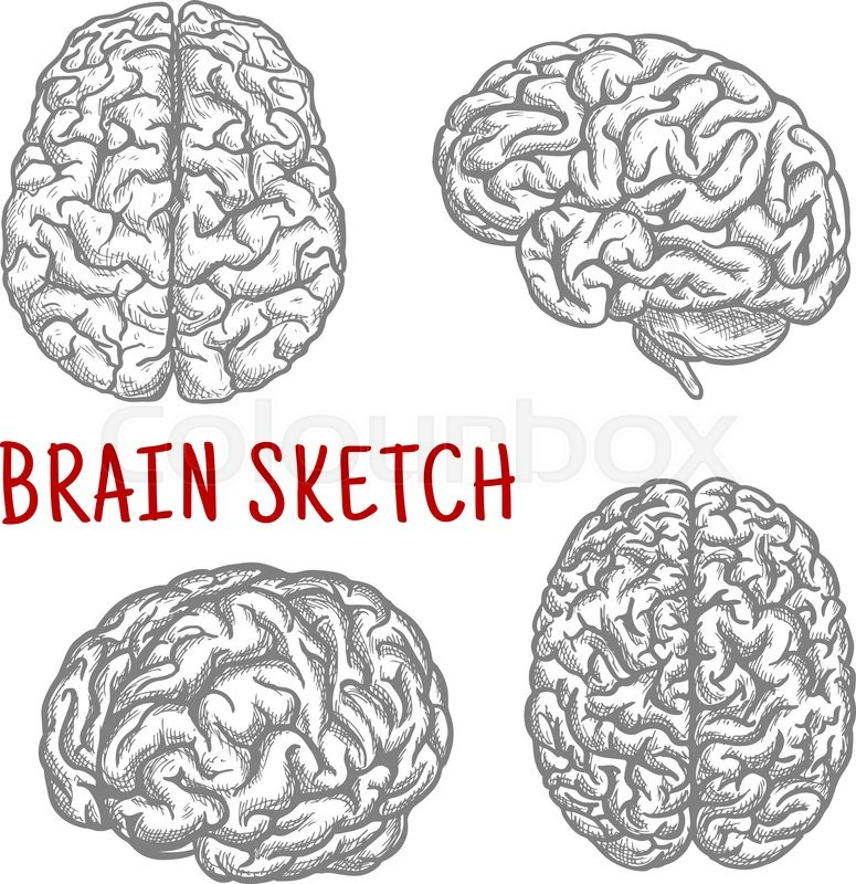 Brain sketch symbols with engraving illustrations of anatomically brain sketch symbols with engraving illustrations of anatomically detailed human brain at different angles great for intellect and mind concept or t shirt ccuart Choice Image