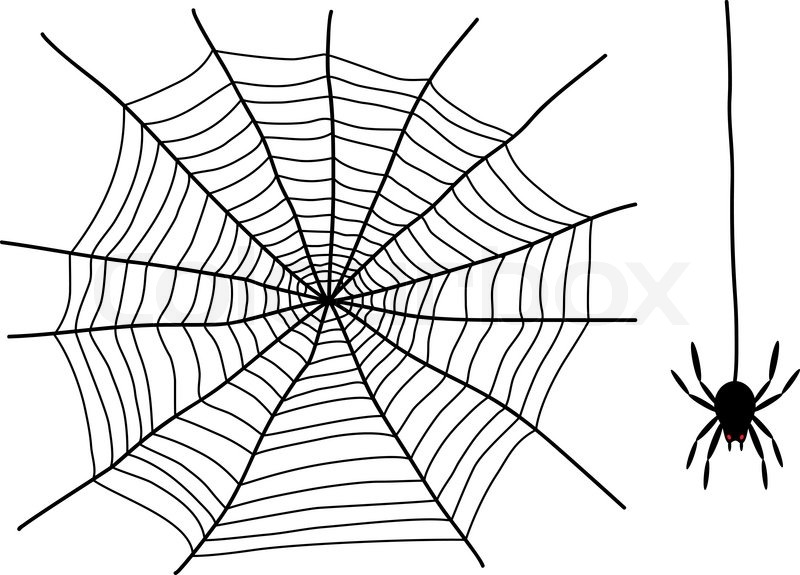 black spider and spider web isolated on the white