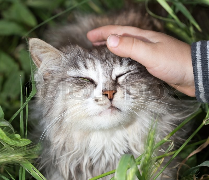 Stock image of 'Cat and the hand on nature'