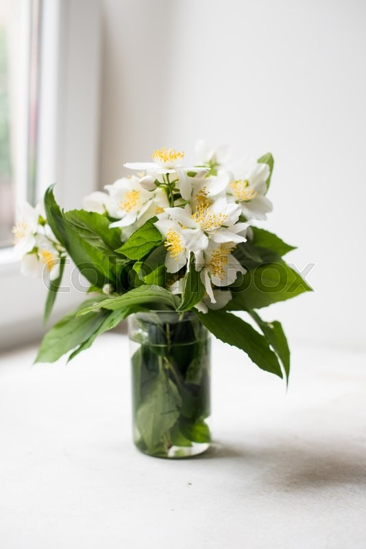 Stock image of 'Bouquet of fresh white summer jasmine flowers in interior on the white background'
