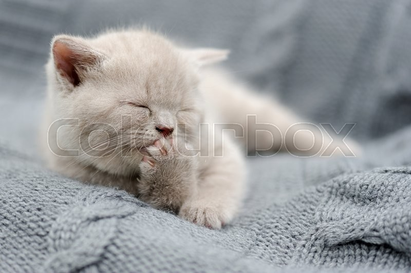 Stock image of 'Cute gray funny baby kitten in gray cloth'