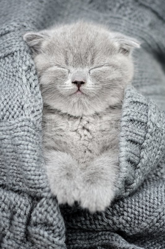 Stock image of 'Cute gray funny kitten sleep in gray cloth'