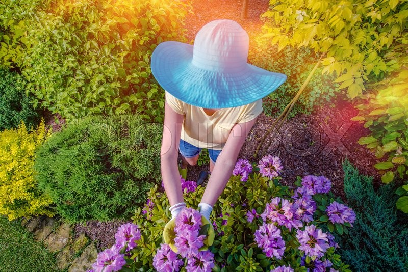 Stock image of 'Garden Works. Caucasian Woman in Large Blue Summer Hat Working in the Garden. Top View.'
