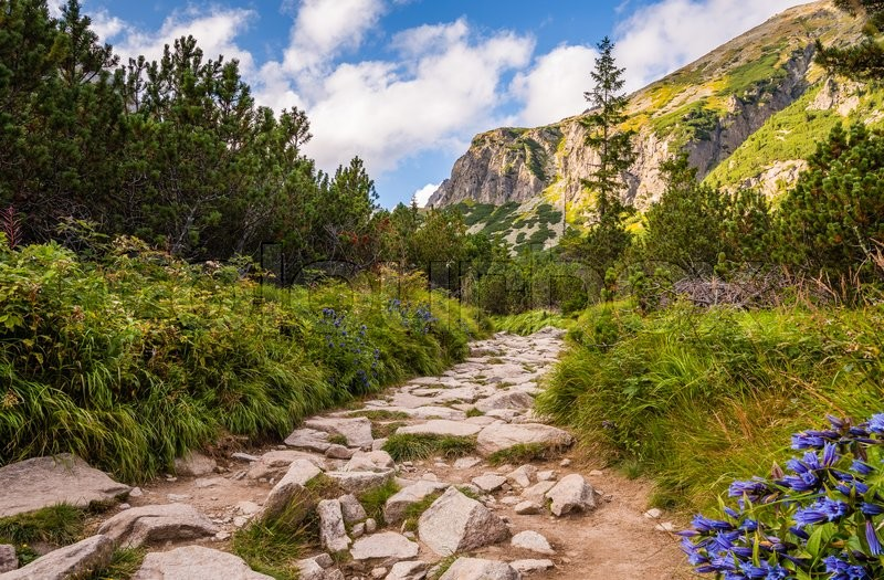 Stock image of 'Rocky Hiking Trail in the Mountains on Sunny Day. Mlynicka Valley, High Tatra, Slovakia.'