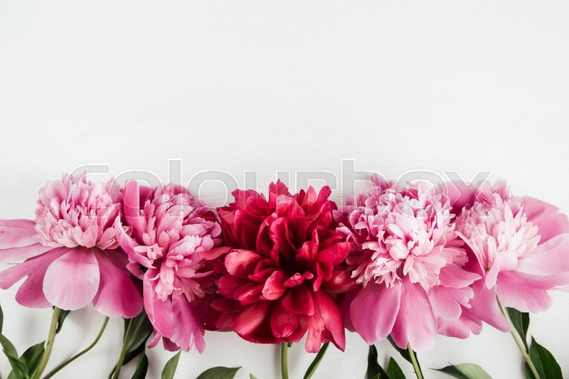 Stock image of 'Pink and red peonies flowers with leaves on white isolated background, copy space, flat lay, top view'