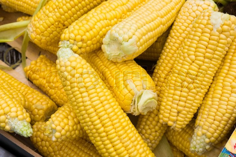 Stock image of 'Corn cobs'