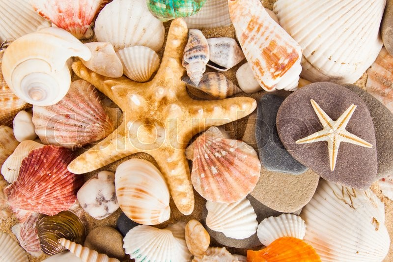 Stock image of 'Sea shells background'