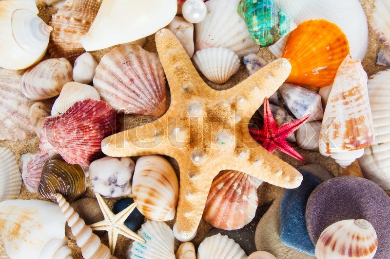 Stock image of 'Summer background.  Sea shells with sand as background'
