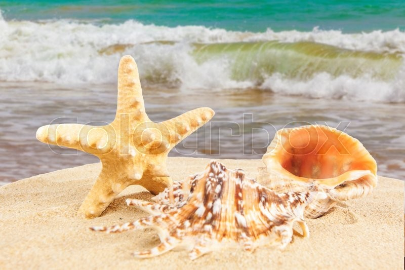 Stock image of 'Sandy beach.  Starfish on the Beach.  Summer Time'
