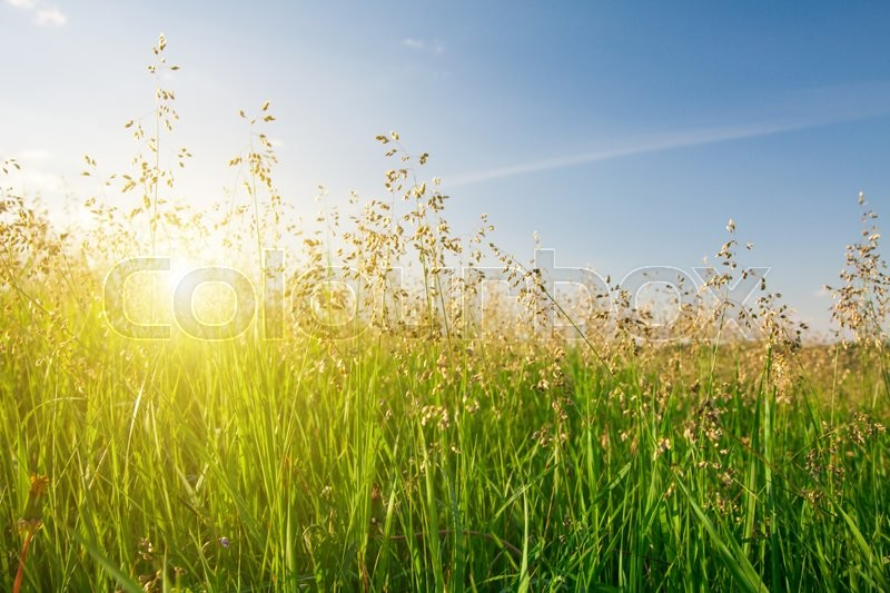Stock image of 'Sunset and grass'