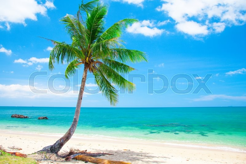 Stock image of 'Tropical beach with coconut palm'