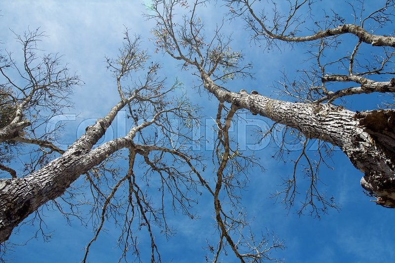 Stock image of 'Tree and blue sky blackground'