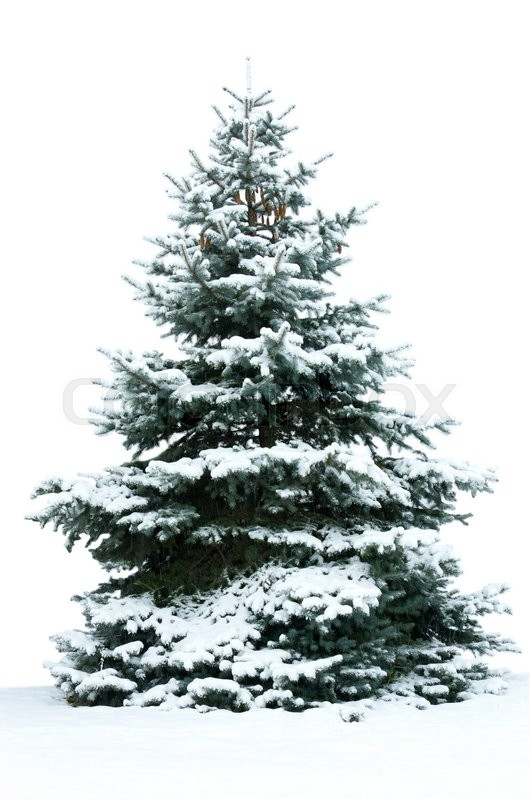 Stock image of 'Christmas Tree - Isolated over White background'