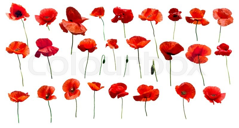 Stock image of '\Set of flowers poppies. Isolated on white background.'
