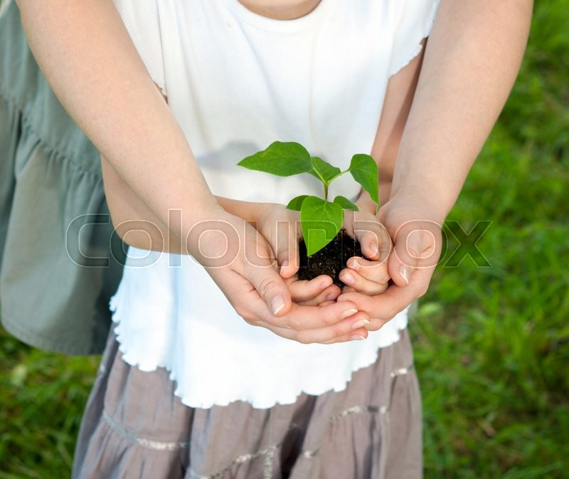 Stock image of 'Young plant in hands against spring green background. Ecology concept'