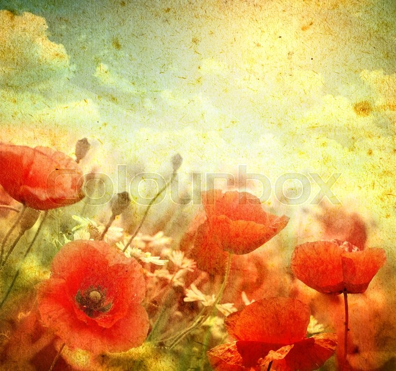 Stock image of 'Photo of a poppies flowers on a grunge background'