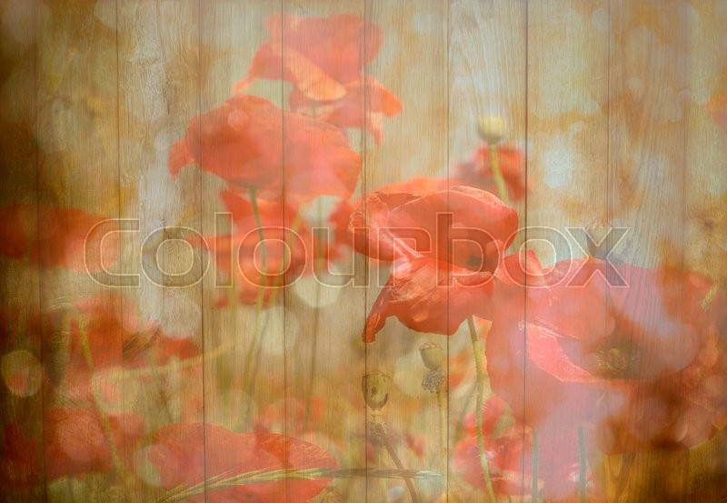 Stock image of 'Photo of a poppies flowers on a wood  background.'