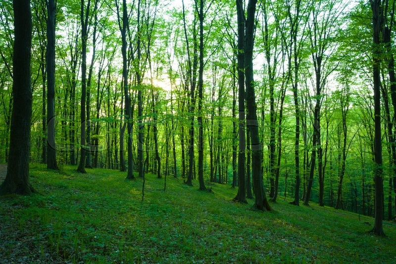 Stock image of 'Sunlight in the green forest, spring time'