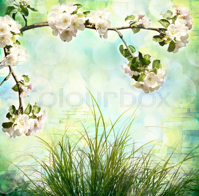 Stock image of 'Apple tree blossoms and fresh green grass'