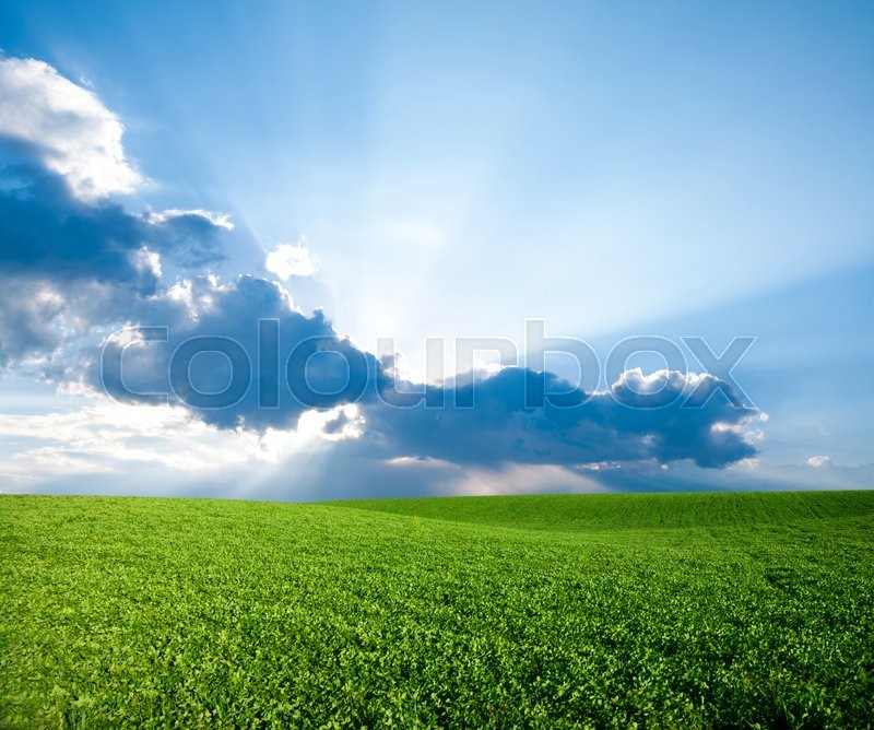 Stock image of 'Green meadow under blue sky with clouds'