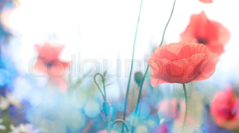 Stock image of 'Poppy flower in the sky '