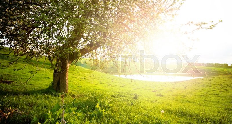 Stock image of 'landscape with tree on the field'