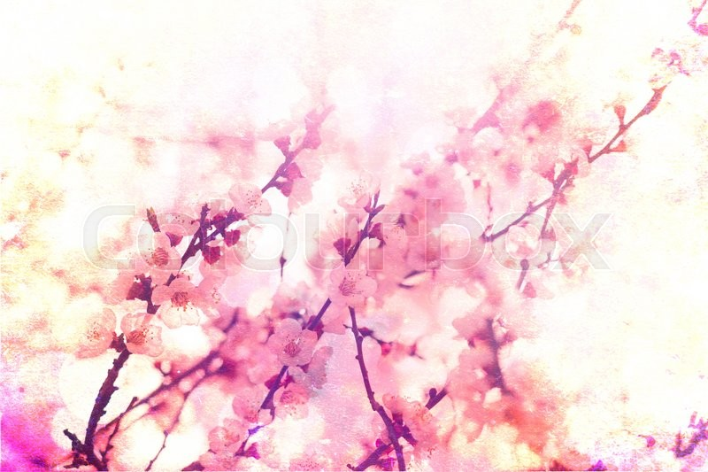 Stock image of 'Beautiful background with cherry blossoms. Flowers vintage background'
