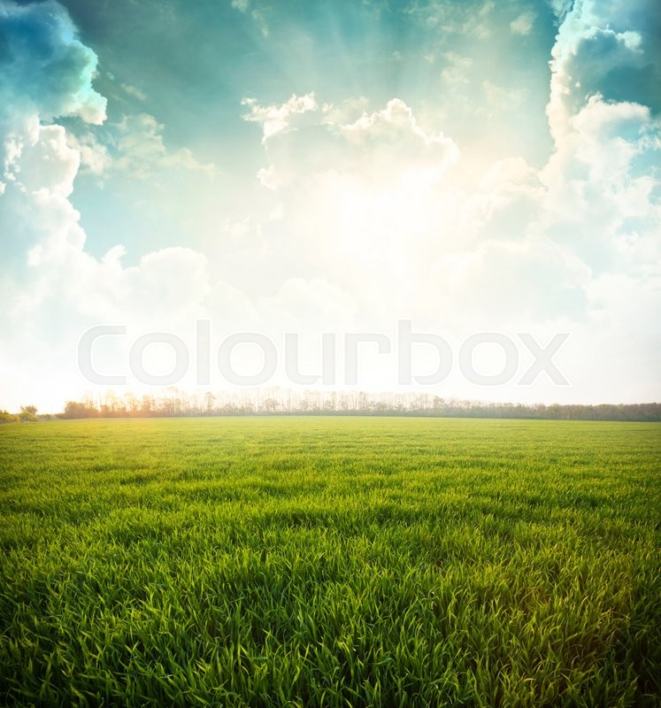 Stock image of 'Green meadow under blue sky with clouds '